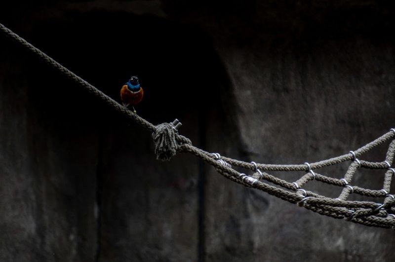 Bird and hammock