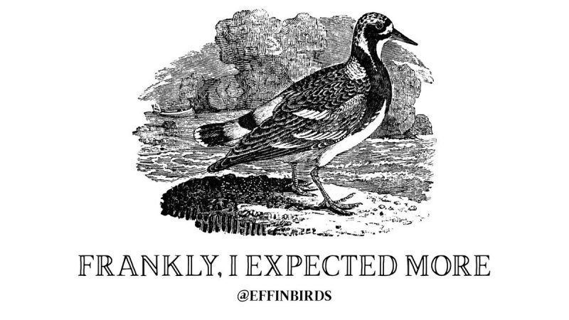 Frankly, I expected more (@EffinBirds)