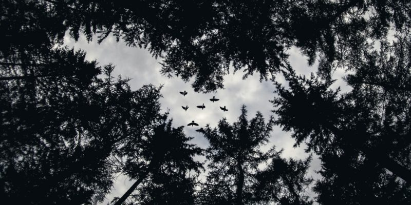 Birds and trees