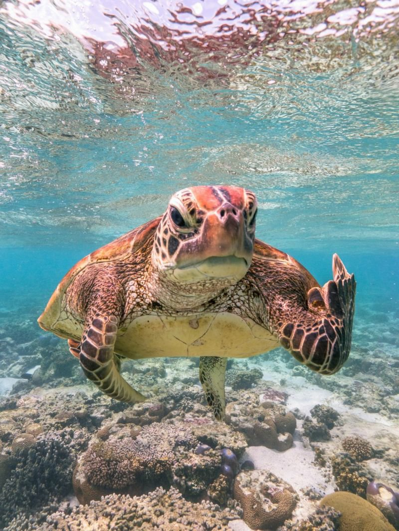 Photograph of turtle that looks like it's giving the middle finger