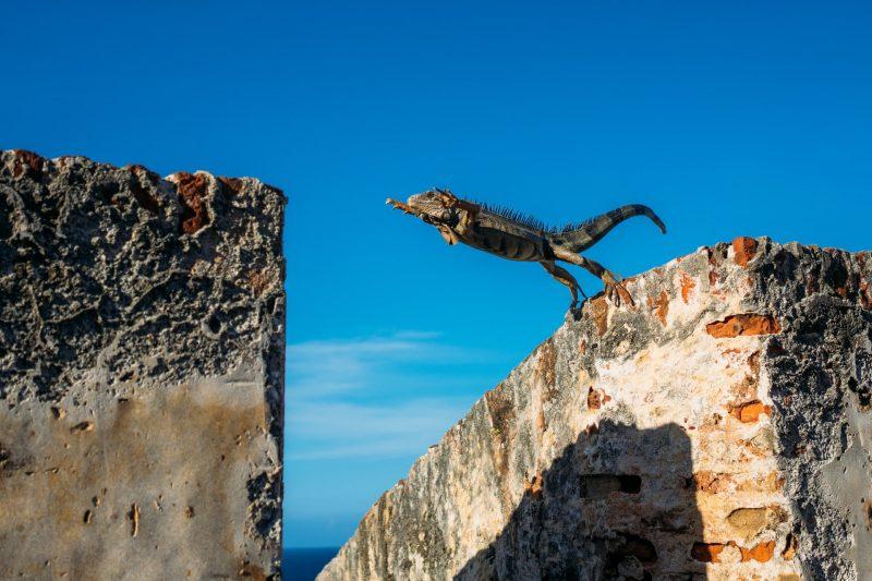 Reptile jumping